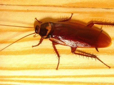 آیا کشتن حشرات گناه است؟