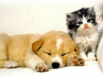 حکم نگهداری حیوانات خانگی در منزل چیست؟